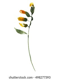 Wild flowers yellow plants herbs botanical watercolor painting.