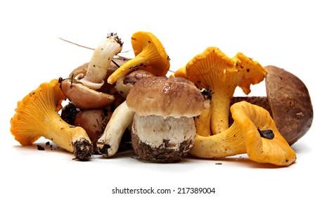 Wild Foraged Mushroom selection isolated on white background, with shadow. Boletus Edulis mushrooms over white background