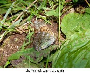 Wild forest butterfly close-up