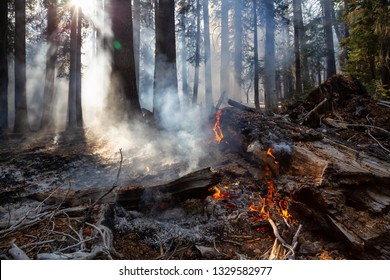 Wild forest fire in Yosemite National Park, California, United States of America. Taken in Autumn season of 2018.