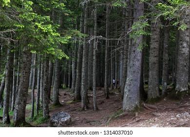Wild forest in Montenegro