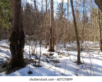 Wild forest of Siberia under the blue sky and cold sun