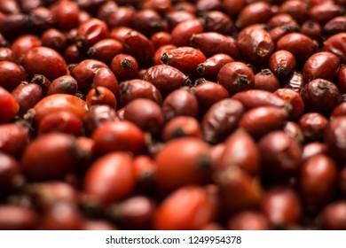 Wild fruit of rosehip. Healthy tea ingredient. Shallow depth of field.
