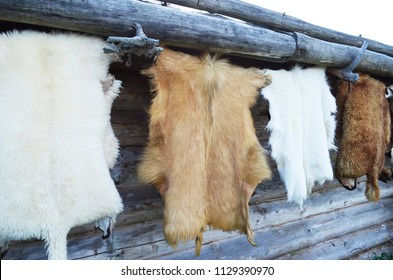 Wild  furs hanging on the rope