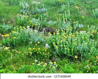 Wild garden with yellow and white flowers under Crna Prst in Triglav national park and Julian alps, Slovenia - Shutterstock ID 1571458549