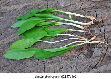 Wild garlic, ramson or bear garlic on wooden background