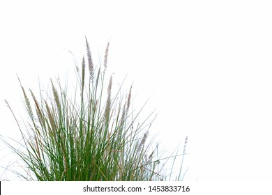 Wild grass bush with flower blossom on white isolated background