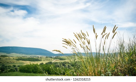 Wild grass ears on a green rural field with cloudy sky