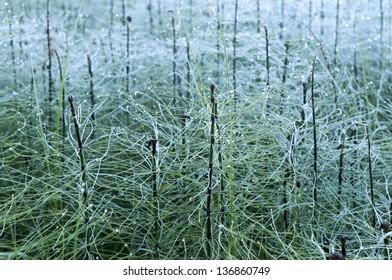 wild grass field in morning full of bright dew drops