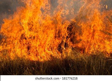 Wild grass fire and a roll of razor wire forming the shape of a heart
