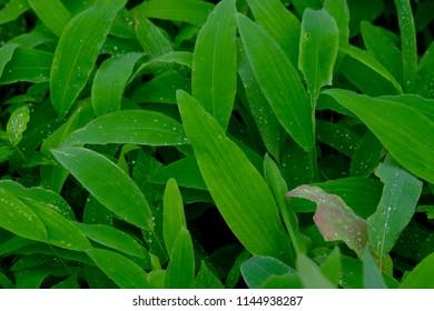 wild grass leaves background pattern