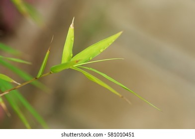 Wild grass leaves with natural soft background for copyspace. (Selective focusing)