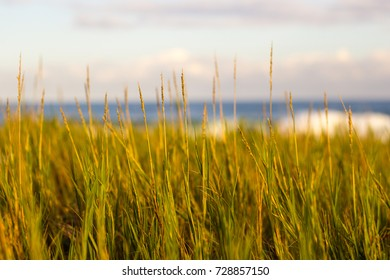 Wild grass with ocean horizon - Autumn color