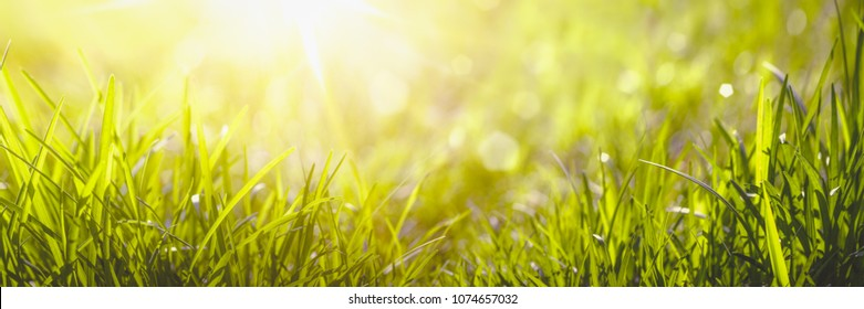 wild grass in sunlight