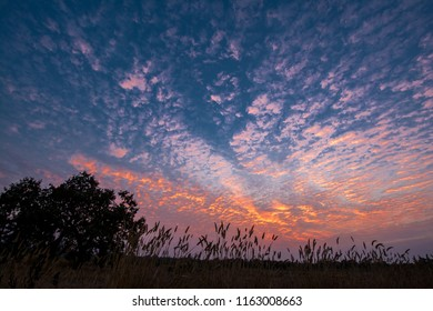 Wild Grass at Sunset with Cumulus Clouds