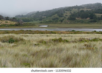 Wild Grass, Water and Rolling Hills