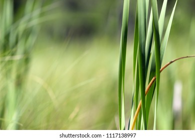 Wild Grass In Wilderness