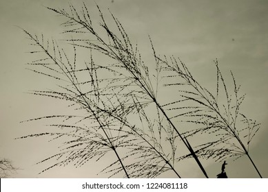 a wild grasses in grey