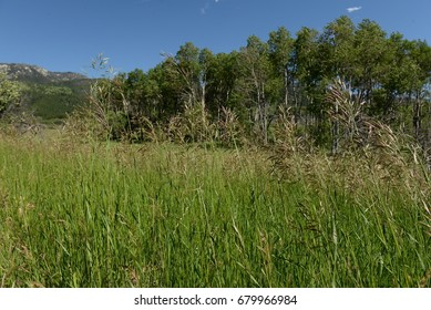 Wild Grasses on the Meadow