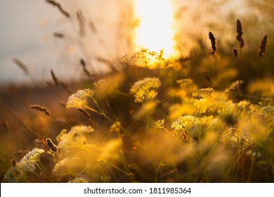 Wild grasses on the sea coast at sunset. Macro image, shallow depth of field. Beautiful autumn nature background