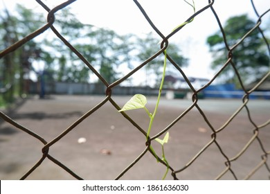 Wild green foliage vines on a wire fence