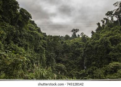 Wild and green Vietnamese rain forest