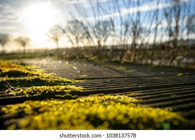 Wild growing green moss on wooden planks of a footpath bridge with view over a polder landscape and backlight of the winter sun
