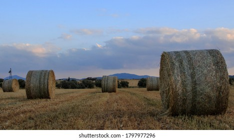 Wild Hay Bales In The Field