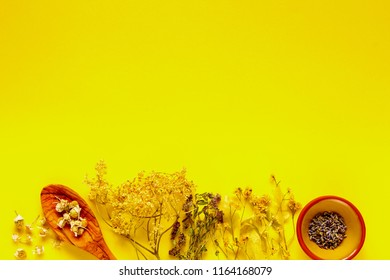 Wild and Healing herbs for clean eating biohackers paleo diet on yellow background. Flat lay, top view.