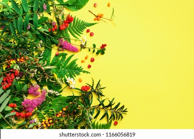 Wild healing herbs on bright yellow background. Alternative medicine concept, holistic approach. Top view, copy space, flat lay.
