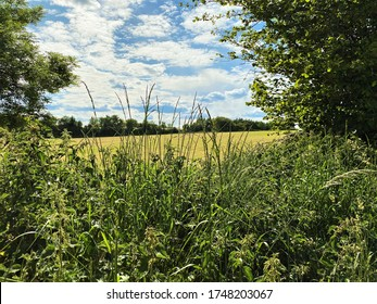 Wild hedgerow, with a large mown field beyond in, Tong, Bradford, Yorkshire