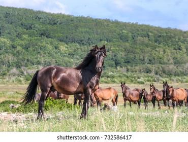 wild herd of horses