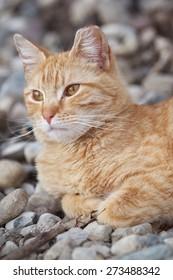 A Wild Homeless Cat Sleeping Outside on the Warm Rocks