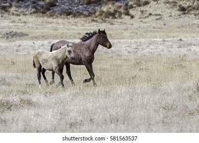 Wild Horse with Baby Colt