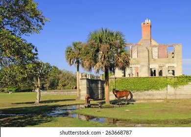 Wild Horse in front of Dungeness Ruins Historical Site - Cumberland Island National Seashore, Georgia