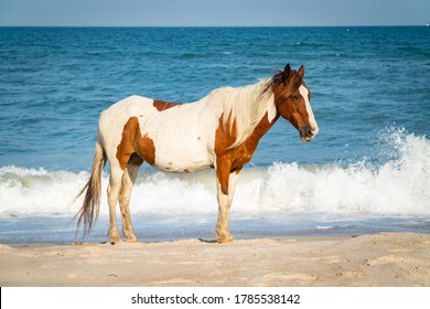 Wild Horse in front of Ocean on Assateague Island