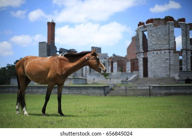 Wild Horse in Front of Ruins on Cumberland Island, Georgia