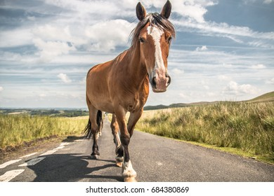 Wild Horse at Heol Ddu, Glanaman