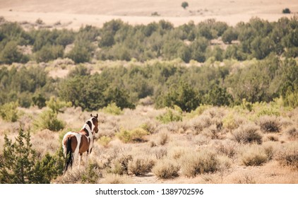 A wild horse looking over the vast Utah desert in the Western United States