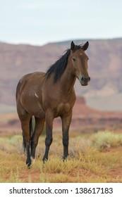 Wild horse in Monument Valley, Arizona, USA