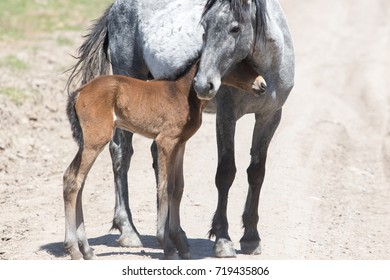 Wild horse mother and foal standing together