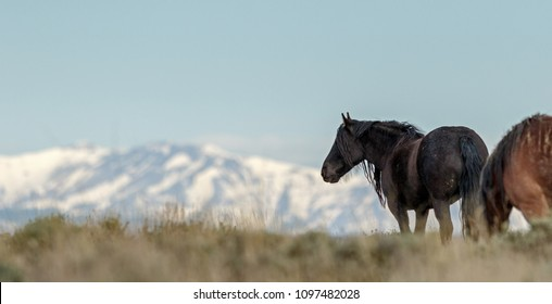 Wild Horse and Mountains