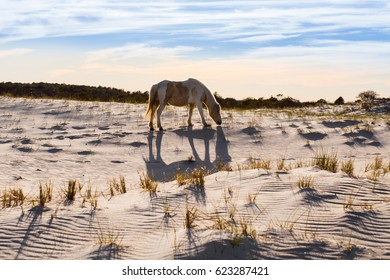 Wild horse on the beach during sunset.