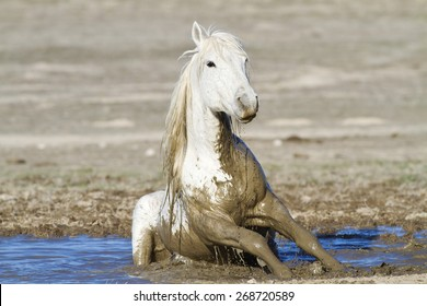 Wild Horse playing in the mud