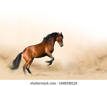 Wild horse in prairies, playing in the sand