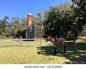 Wild horse and ruins on Cumberland Island, Georgia