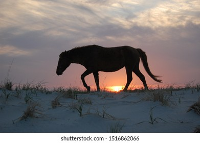Wild horse silhouette, Assateague Island, Worcester County, Maryland.