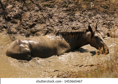 Wild horse taking a bath at the watering hole at Theodore Roosevelt National Park