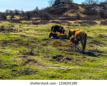 Wild horses along the Appalachia Trail