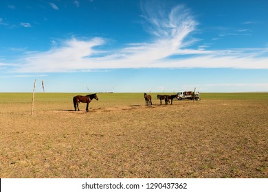 Wild horses being domesticated by traditional Mongolian nomads in Gobi Desert during beautiful summer day with blue sky (Gobi Desert, Mongolia, Asia)